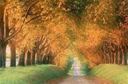 Autumn-Tree-Tunnel