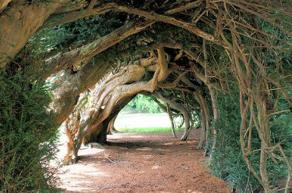 Yew-Tunnel