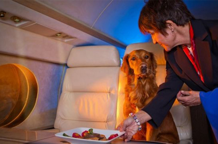 Top-US-Airlines-That-Allow-Pets-in-Plane