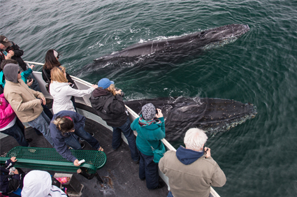 Whale-Watching-in-Cabo-San-Lucas