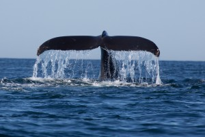 Whale Watching