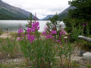 Chilkoot Trail,