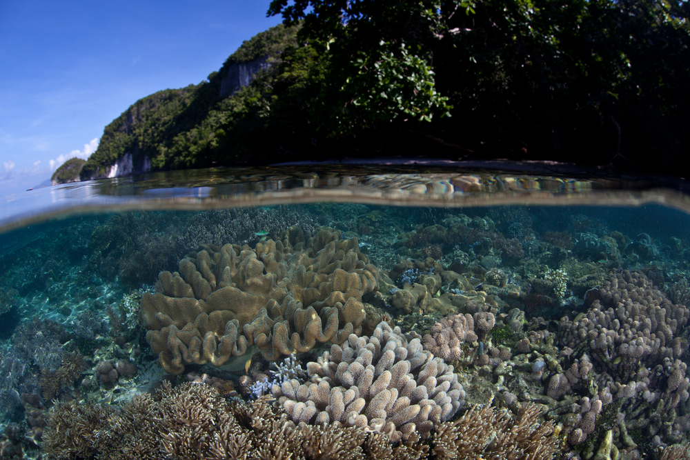 The Coral Triangle, Asia Pacific
