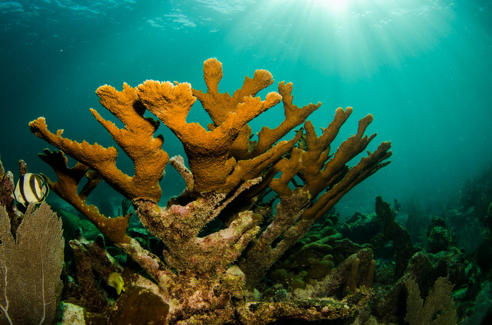 Mesoamerican Reef, West Indies
